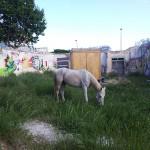 Un cavall al costat de la cabana