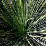 botànic116