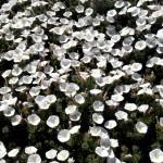 botànic140