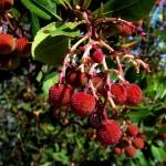 botànic143