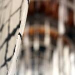 Gyotaku_enR-2014056