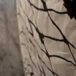 Gyotaku_enR-2014095