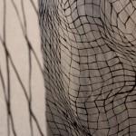 Gyotaku_enR-2014098